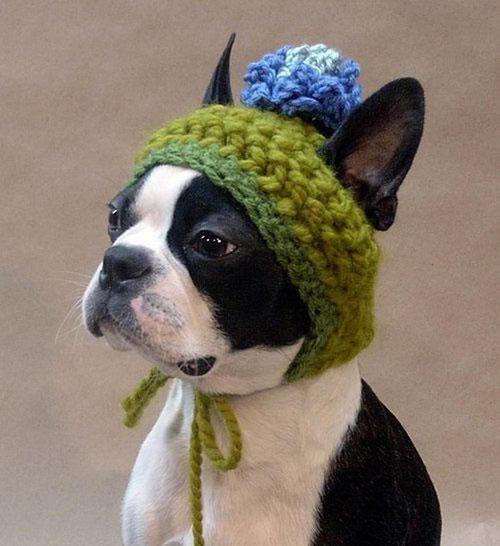 90 Dog Hat